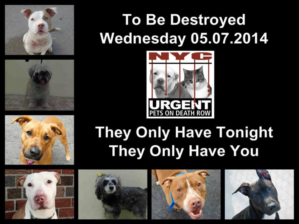 To Be Desytroyed 8 Dogs To Be Killed Wed 5 7 14 Shame On You Nyc Acc This Is A High Kill Shelter Many Goo Dog Friends Animal Rescue Nyc Dogs