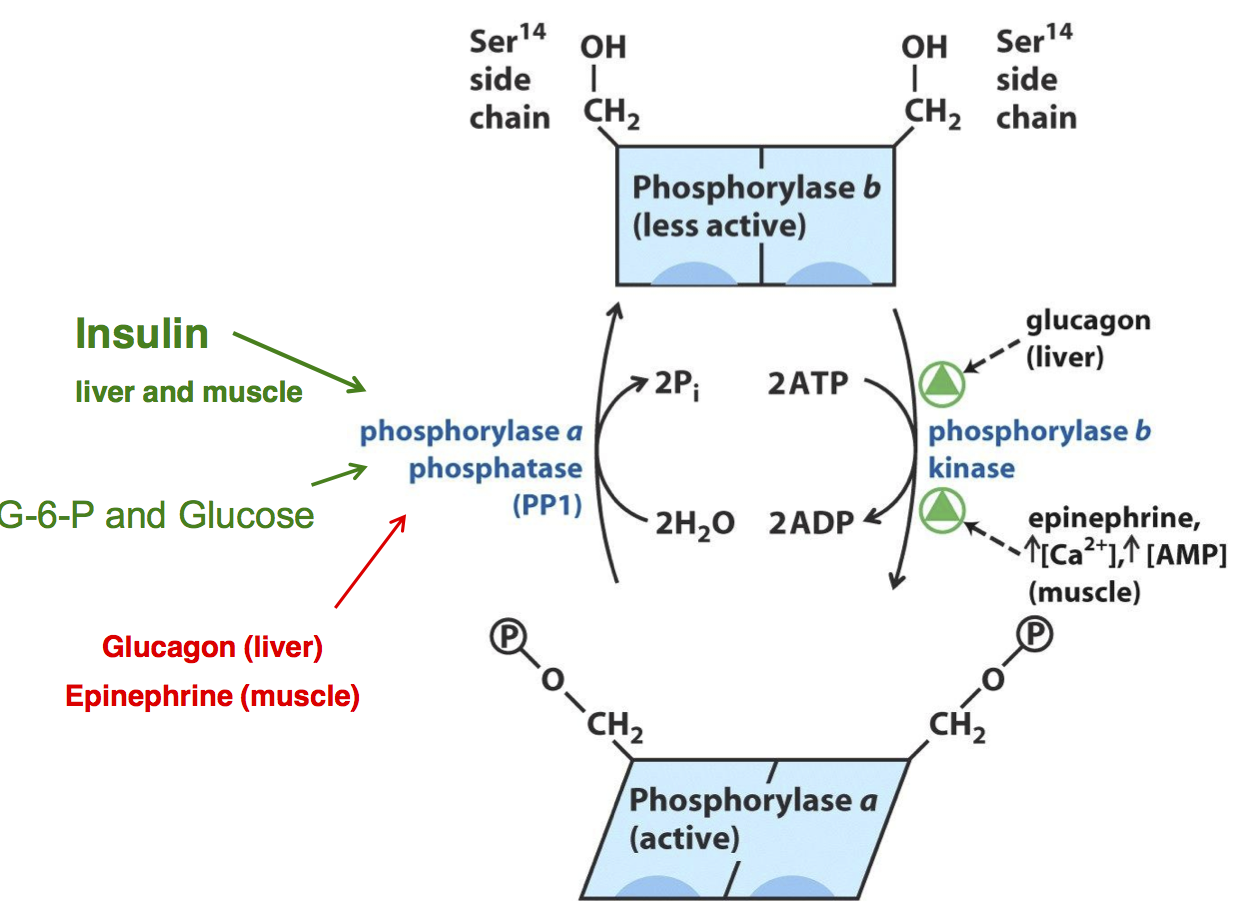 Pin On Bchm Concepts Of Biochemistry