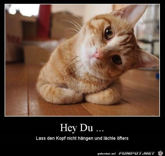 Hey Du.. | Süße tiere, Süße tiere bilder, Katze lustig