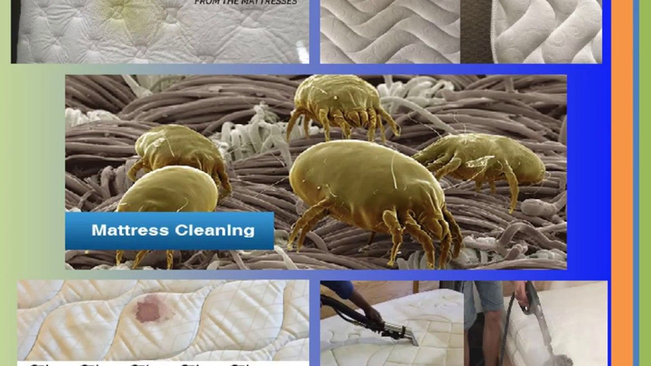 our mattress cleaning professional will 100 get rid of harmful