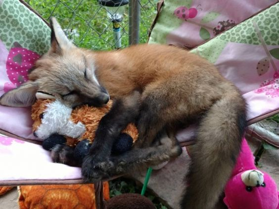 lily the fox rising star of the internet 12 images 27