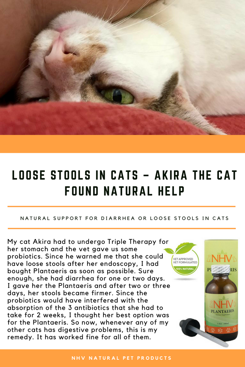Loose Stools In Cats Akira The Cat Found Natural Help With Images Natural Pet Cats Akira