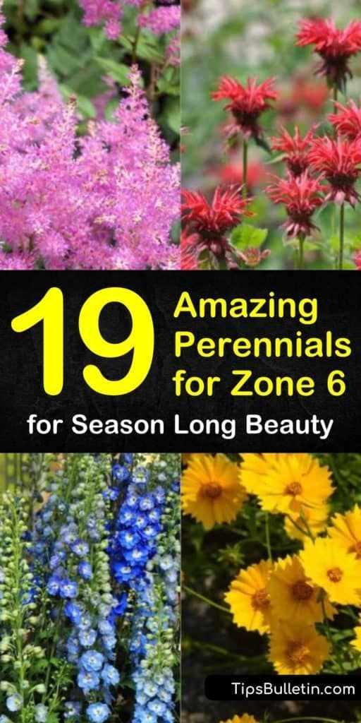 Photo of 19 Amazing Perennials for Zone 6 for Season Long Beauty