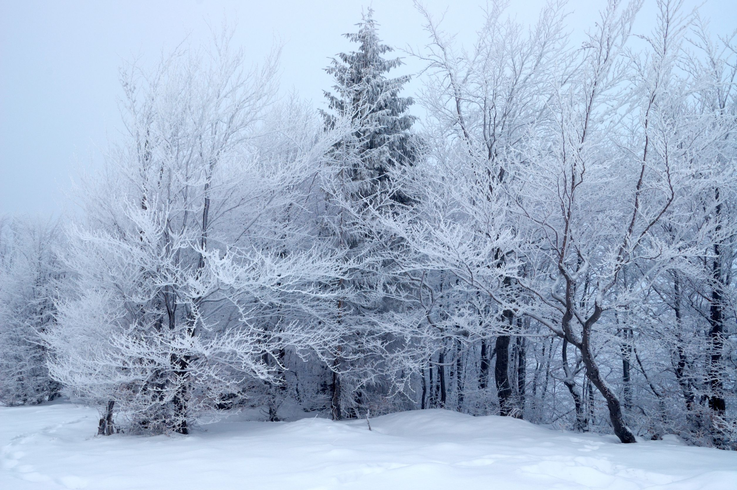 Winter. Photography, Wallpaper for android. Free