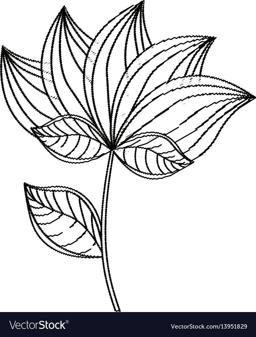 Lotus flower decoration sketch vector image on