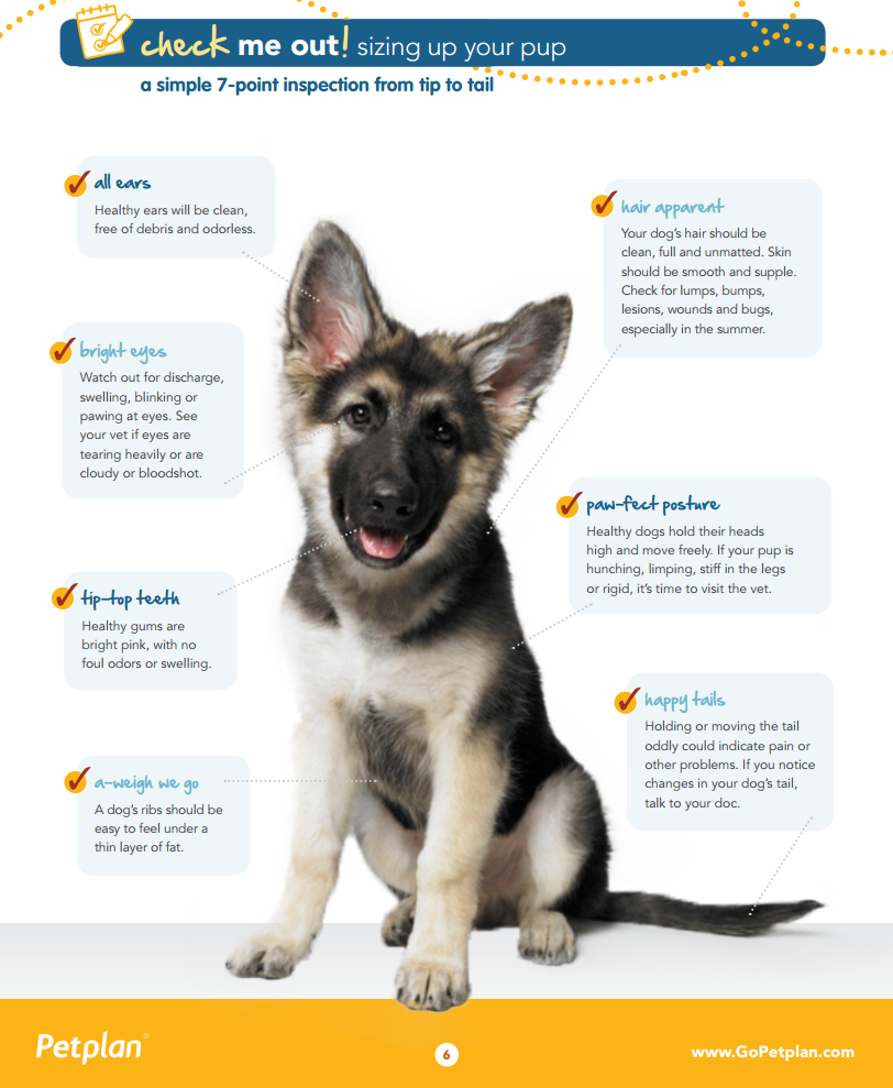 Sizing Up Your Pup: A Simple 7-Point Inspection from Tip to Tail