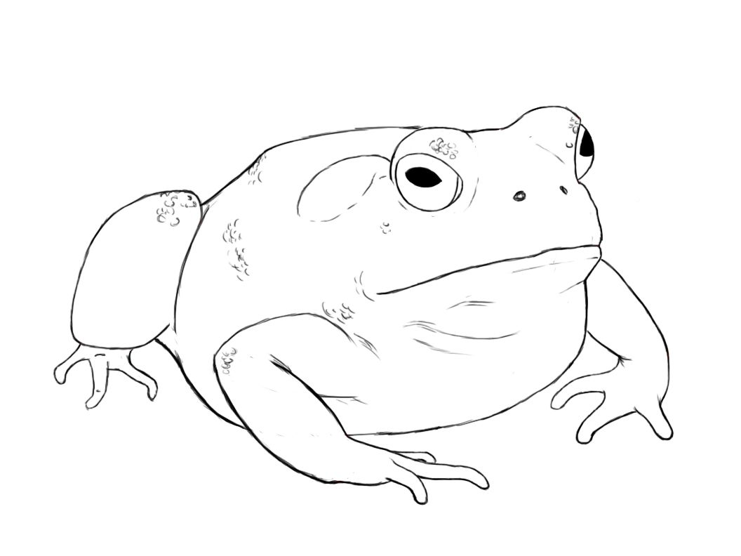 How to draw a toad toad tutorials and paper drawing as nasty as they are several people have requested that i do a tutorial on how to draw a toad biocorpaavc Images
