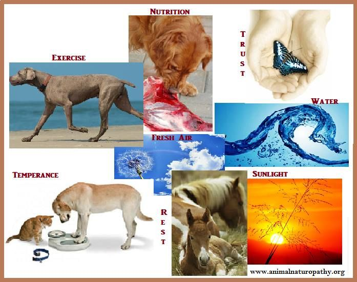 Laws_of_Health_Animal_Naturopathy