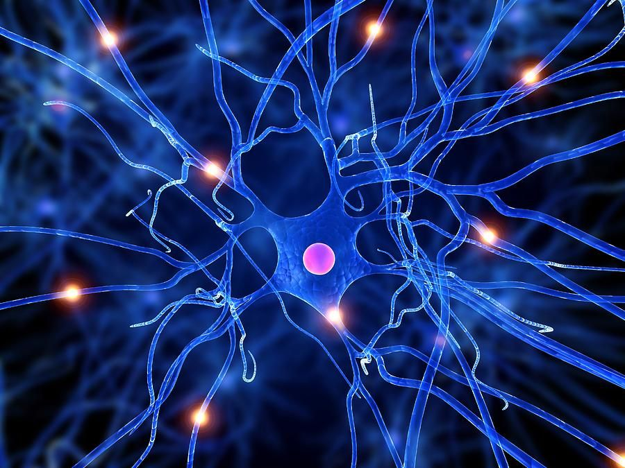 Scientists one step closer to finding how to repair damaged nerve ...