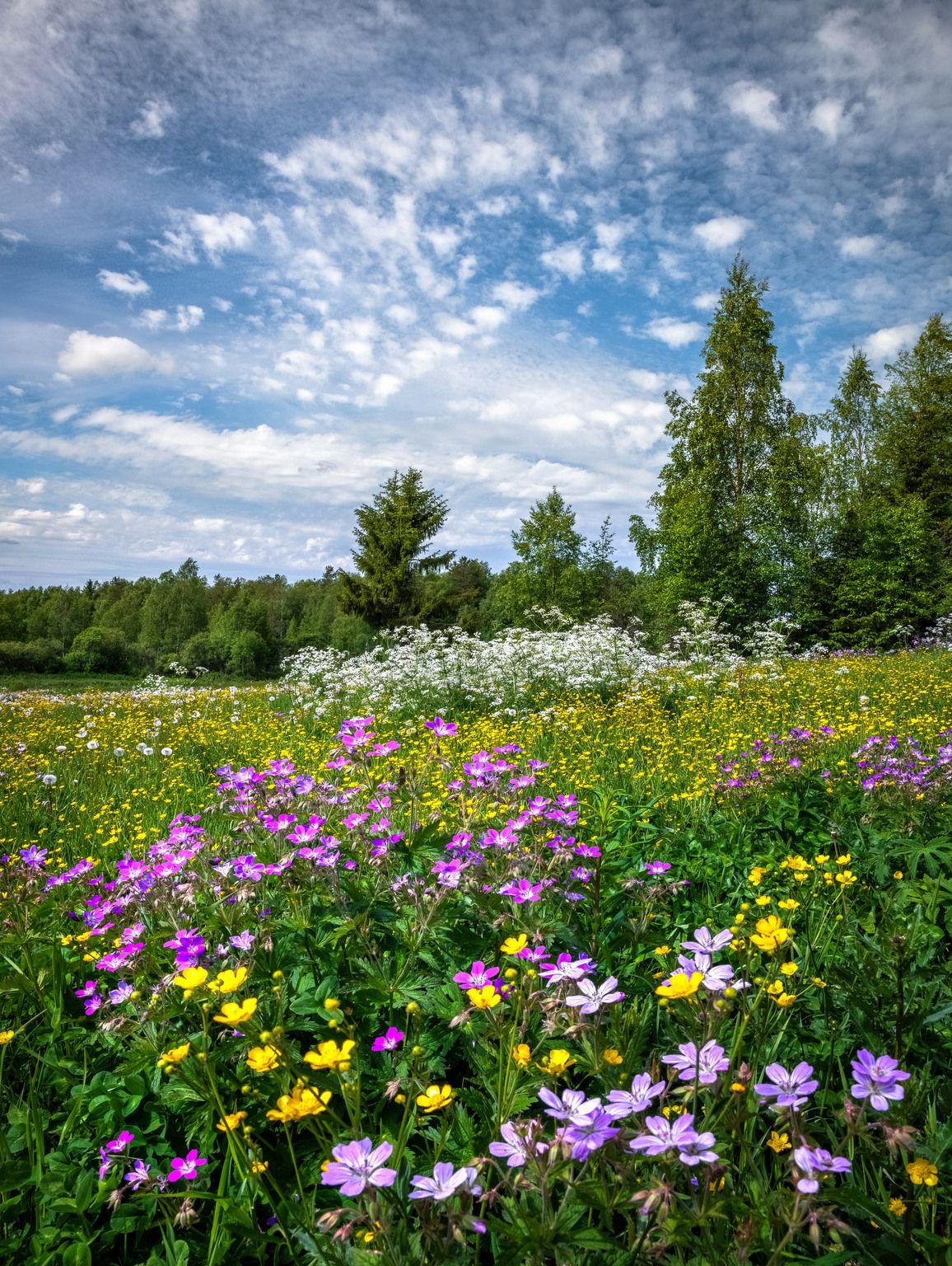 сделать фото картинки поляна цветов рецепт