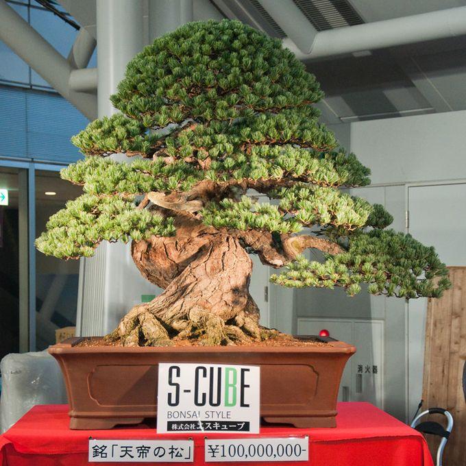 Million dollar bonsai. Here's a mindbending Japanese