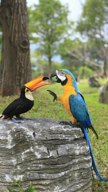 Google birds pinterest oiseaux les oiseaux et for Oiseau domestique interieur