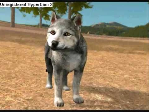 Wolf Quest Pups Pup Wolf Wolf Pup