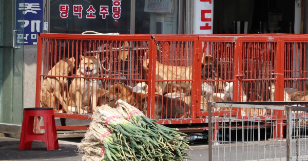 Changwon South Korea Shut Down The Illegal Dog Farms Korea Changwon South Korea