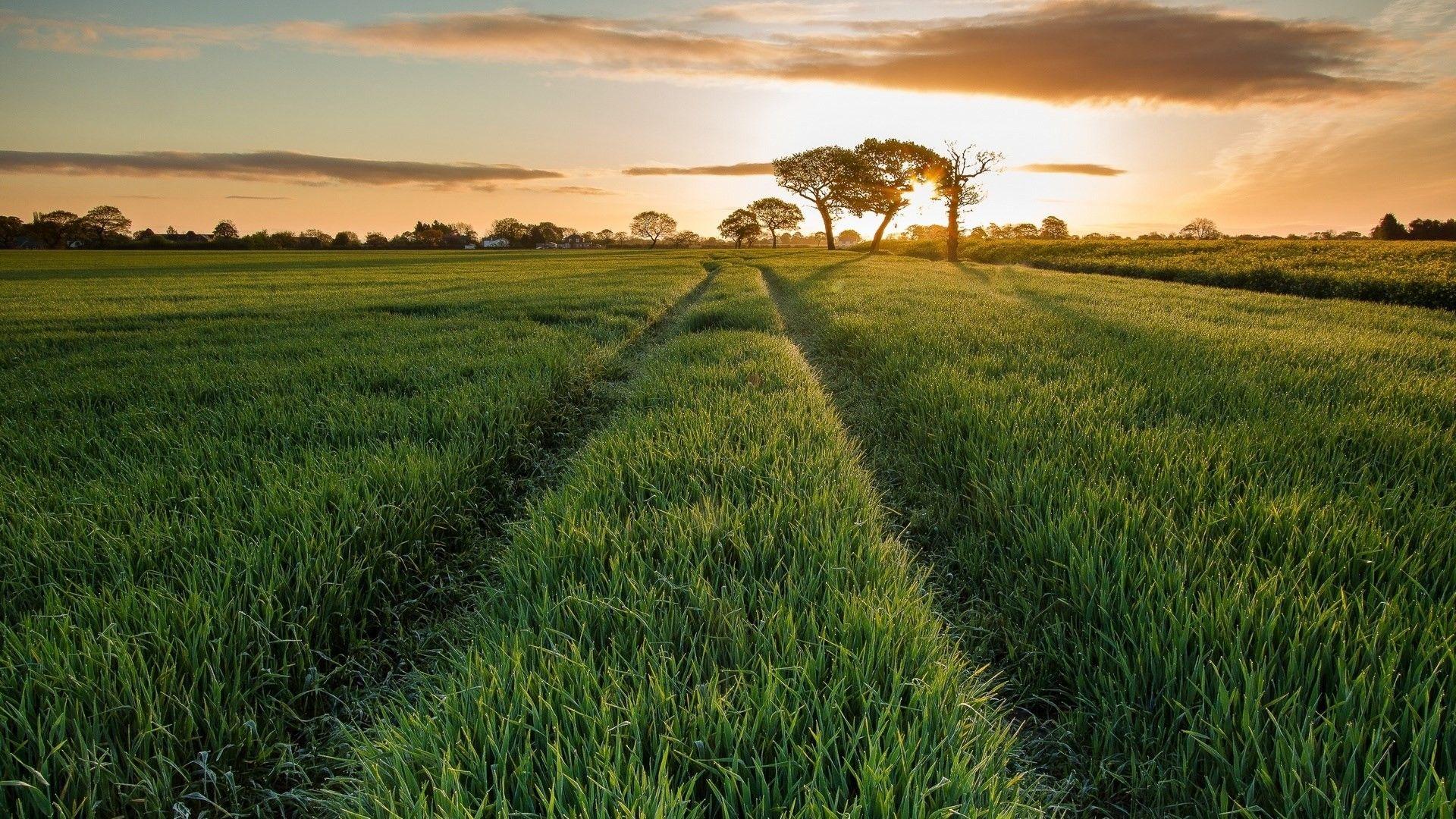 Daily News Scenic Roads Scenic Landscape Hd wallpaper field road summer grass