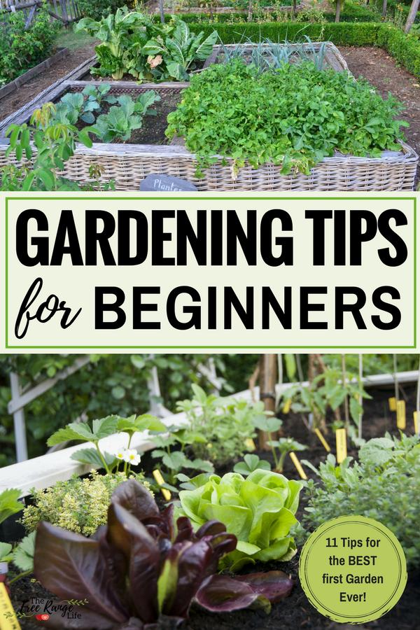 Gardening For Beginners: 11 Vegetable Garden Tips On How To Get Your Best  First Garden