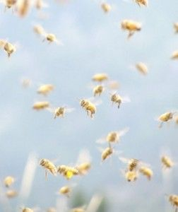 ♕ oh how I love watching the bees
