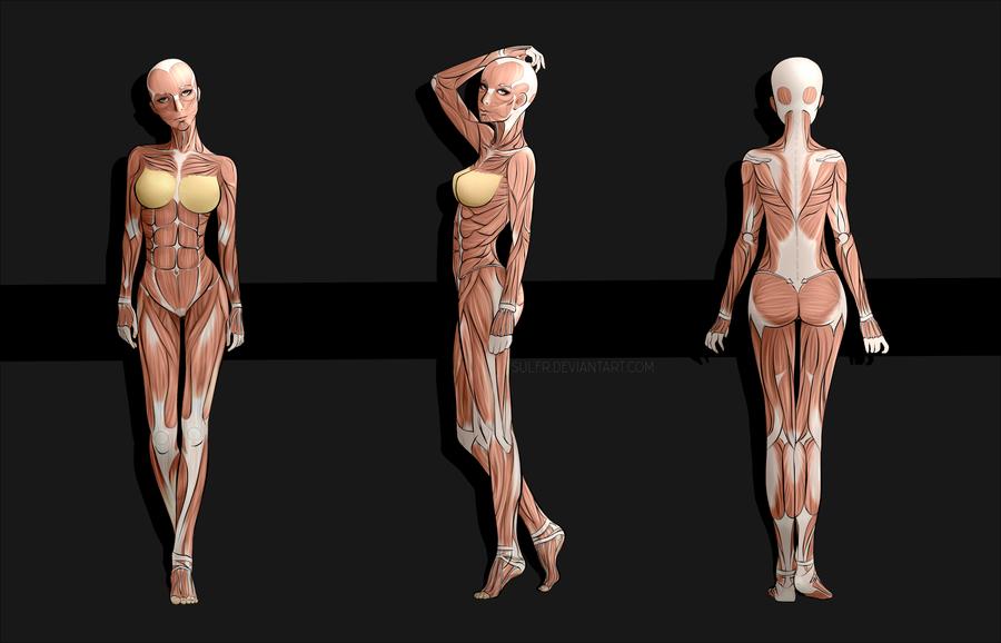 Female Anime Anatomy by sulfr | anatomy reference | Pinterest ...