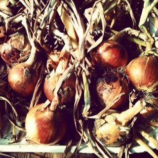 Louises køkken: Løg, onion, zwiebel