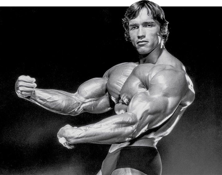 Arnold schwarzeneggers blueprint to cut training build muscle arnold schwarzeneggers blueprint to cut training malvernweather Choice Image
