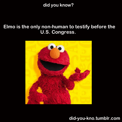 Elmo Testifies Elmo Memes Useless Knowledge Weird Facts
