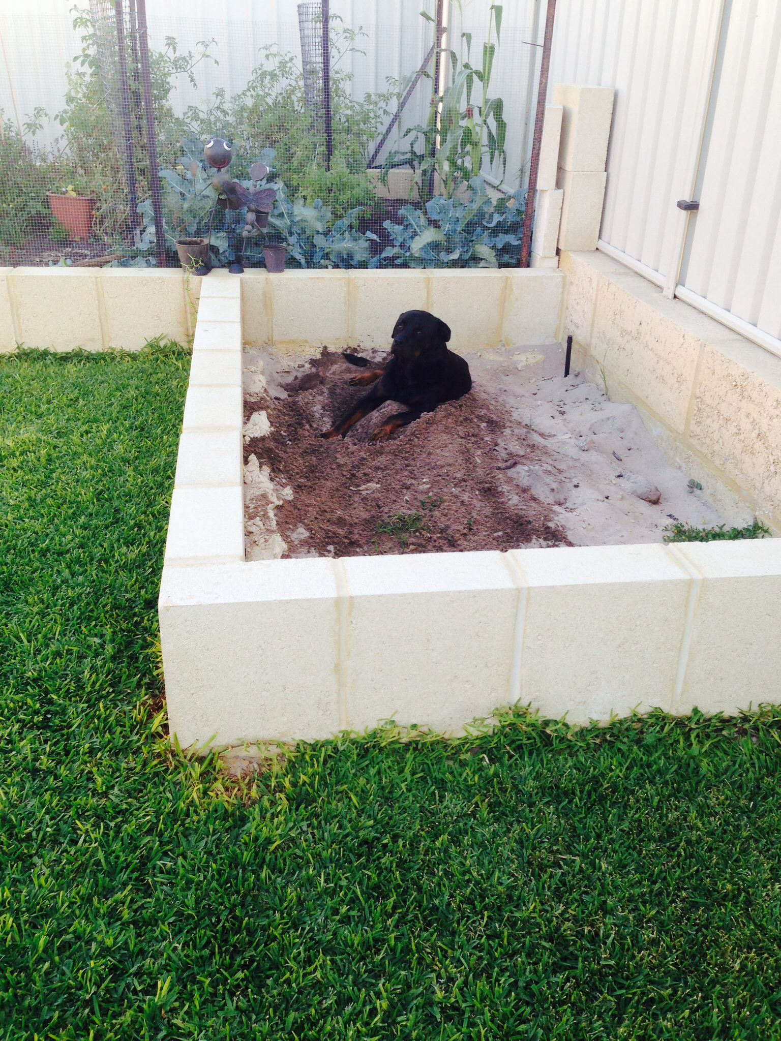 tama u0027s own sand pit dig as much as you like for the dogs