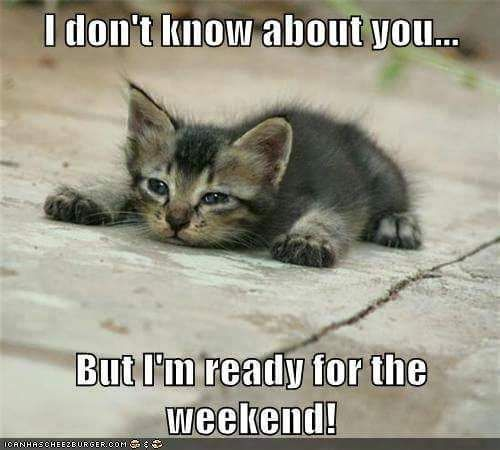 Ready for the weekend! | Cats, Funny cats, Funny cat memes