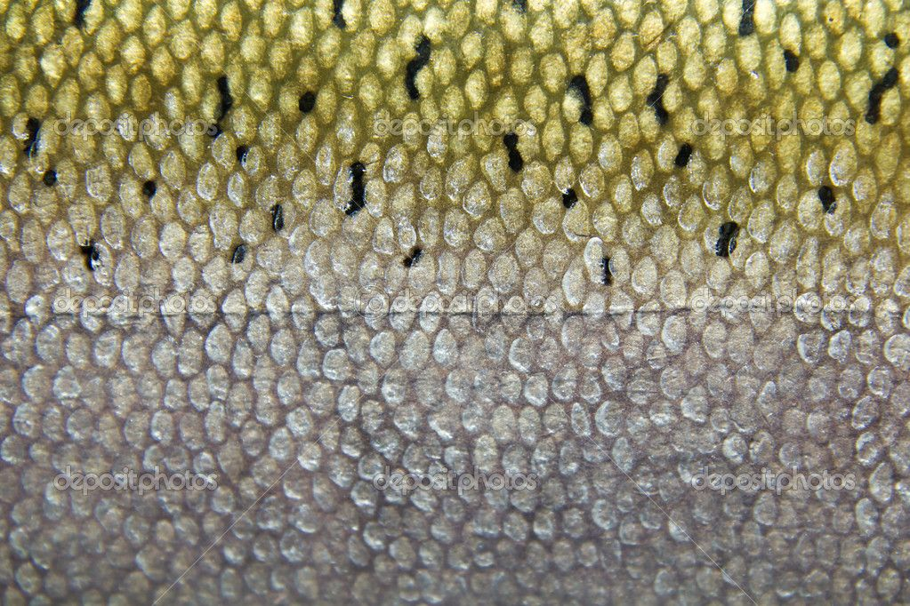 depositphotos 5186576 fish skin and 1 39 023 682