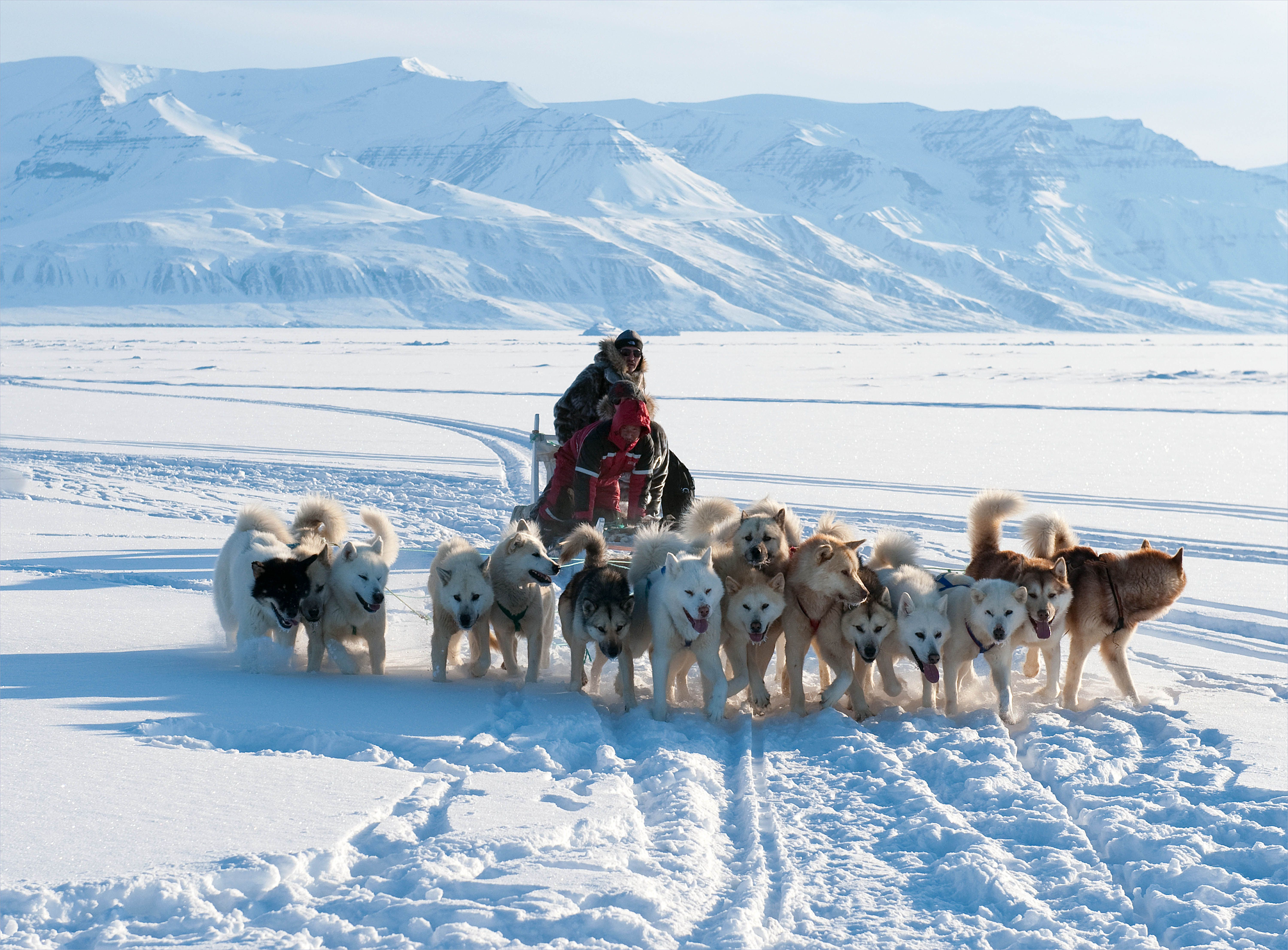 13 sled dogs in arctic landscape sled races pinterest sled
