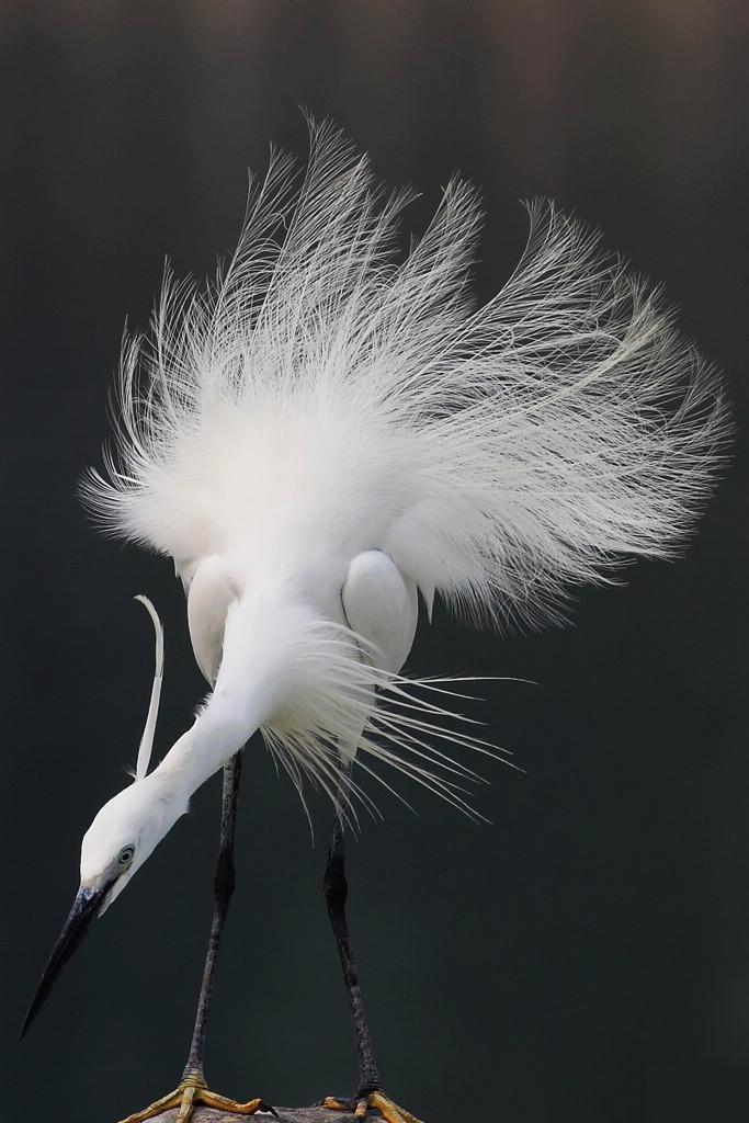 شوف صور جديده صوره حيوانات Pretty Birds Birds Beautiful Birds