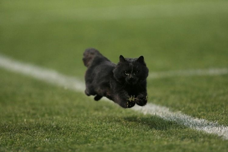 Black Cat Football Field Penrith Panthers Cat Run Catch The Cat