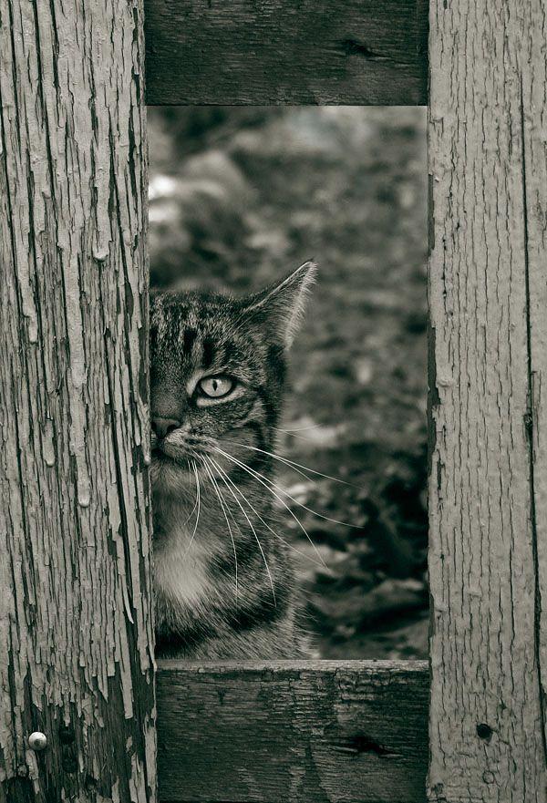 ☆ Framed Cat.。Photographer Ƹ̵ Artist:→ Wojciech Zwoliński ☆