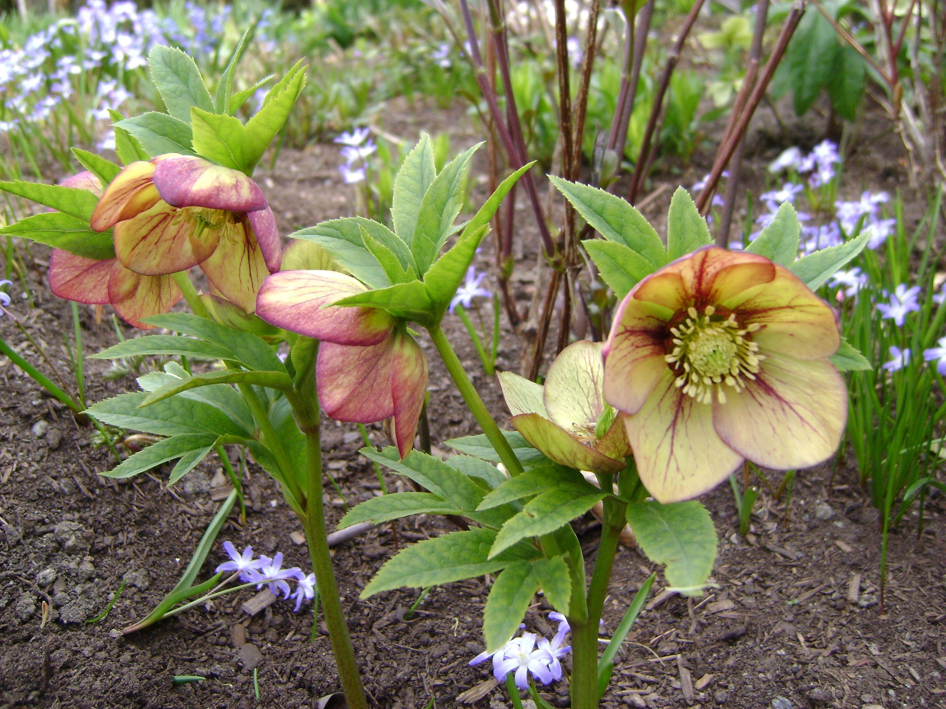 gardenApril10 251