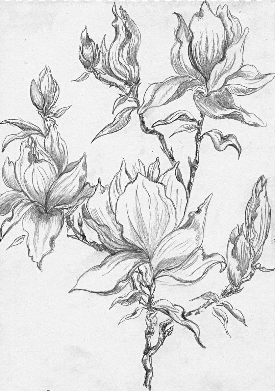 Flowering Magnolia Tree Stencil In 2020 Flower Sketches Flower