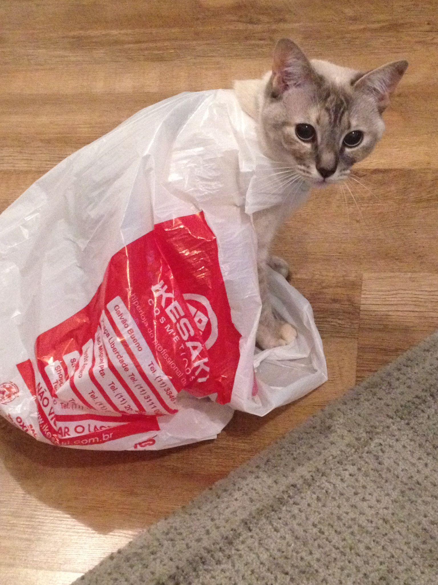 She loves a bag!!!!