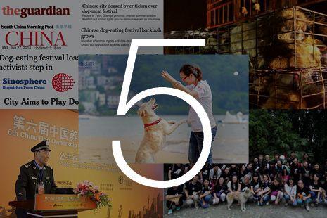 """""""O GRITO DO BICHO"""": Cinco provas de que atitudes em relação aos animai... #ogritodobicho #falabicho"""