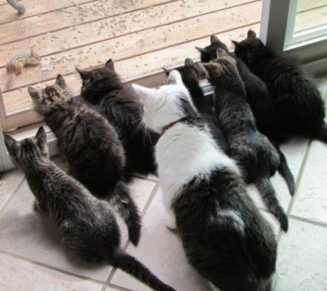 8 Cats 1 Chipmunk Hope The Glass Holds Funny Animals Kitten Pictures Funny Animal Pictures