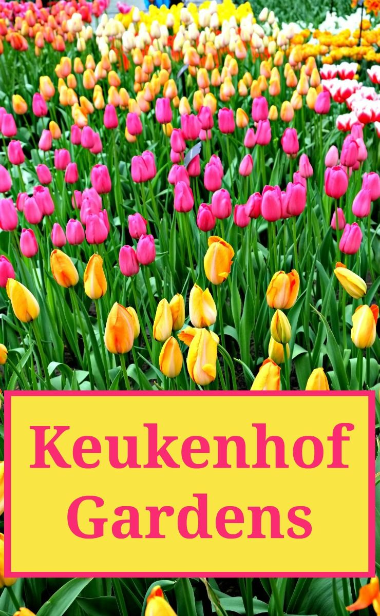 eb1ad3c8202e566717655c0d29ef3fb5 - Keukenhof Gardens To Amsterdam How Far