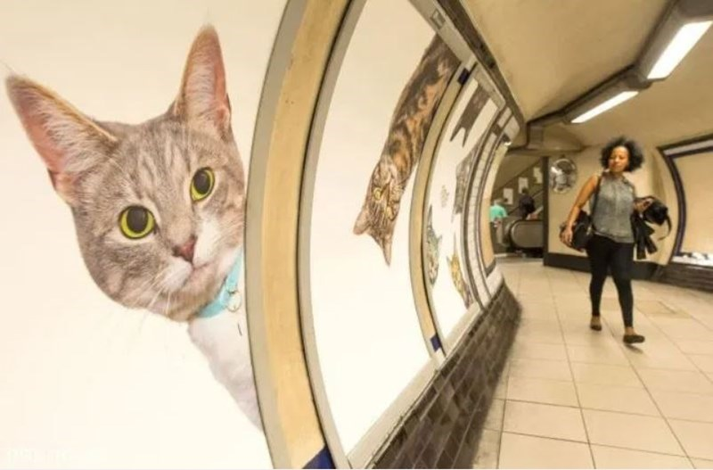 Cat Photos Replace Every Advert In Underground Station In London