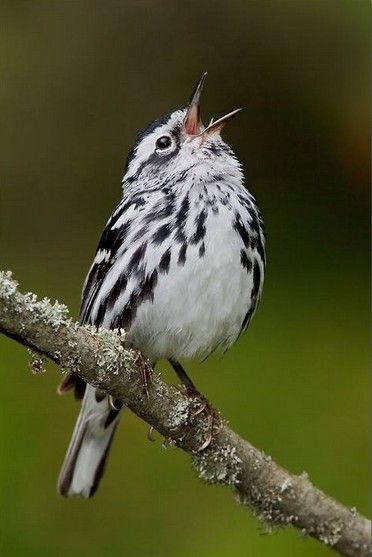 1000 Images About Birds