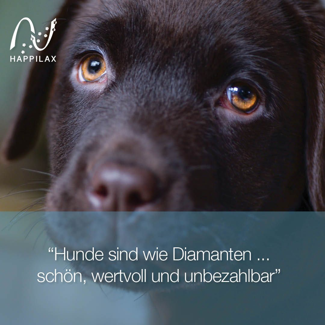 Photo of Happilax dog products with hearts – dog quotes