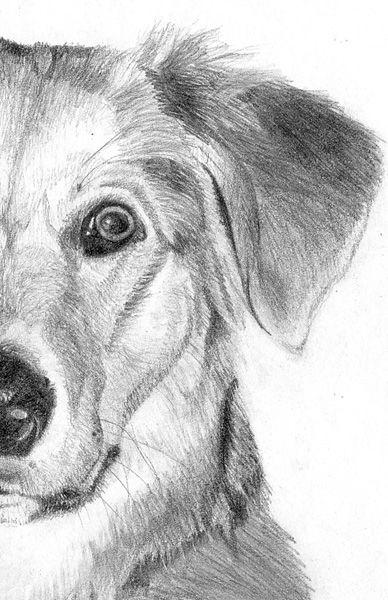Pencil Portrait Dibujos Realistas Dibujos De Perros Pinturas