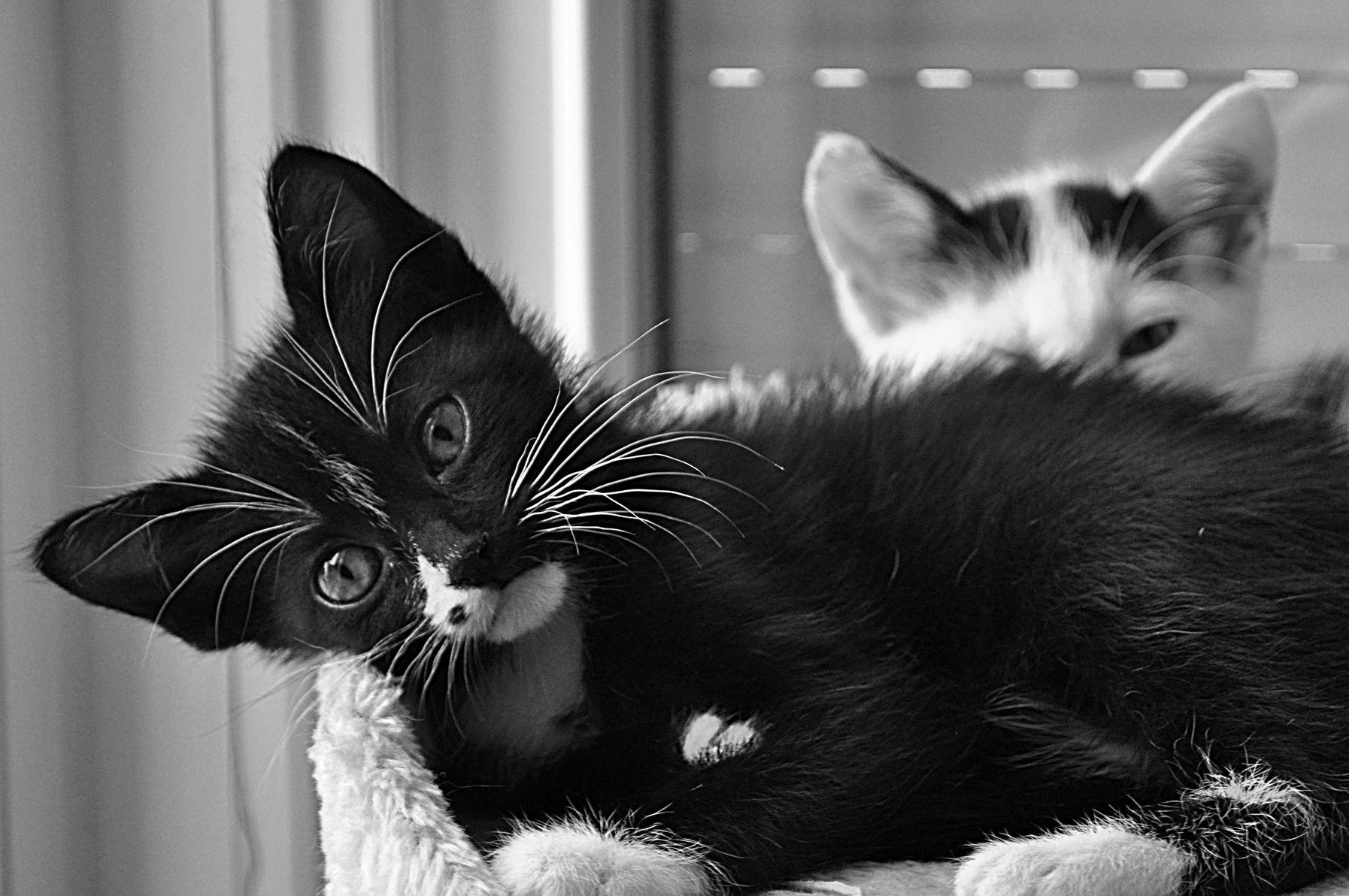 Cute kittens black & white