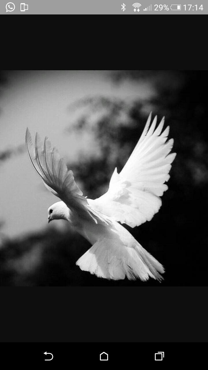 Pin de yilmaz efe en colombe   Pinterest   Cuadro, Religiosas y Pájaro