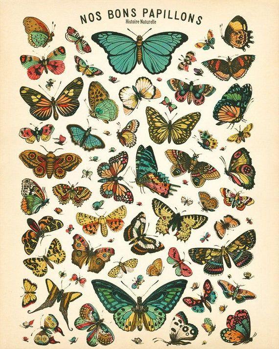 Butterfly Poster - Insect Art - French Butterflies Print - Diagram Chart Wall Art Home Decor Fine Art Print #vi375