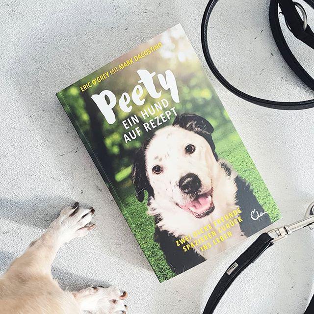 Peety Hashtag On Instagram Posts About Photos And Videos Ina Wiki Traumt Ihr Von Einem Eigenen Hund Oder Habt Ihr Sogar Scho Tierheim Hunde Mischlingshunde