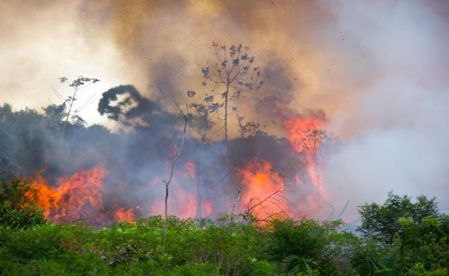 Wildfires Increase In Amazon Due To Human Activity Care2 Causes