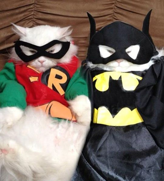 Catman And Purrobin & Catman And Purrobin | Funny pictures Funniest photos and Cat