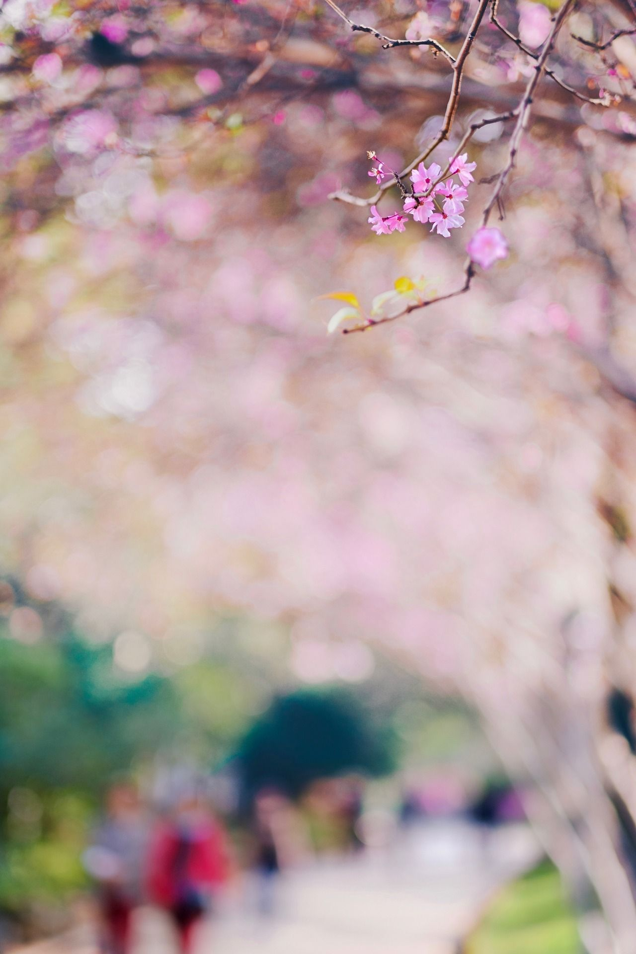 Flânerie - #artists #blossom #china #fujifilm #garden #kunming #landscape #meolog #nature #on #park #photographers #photography #source: #spring #tumblr #x-t2 #xihua