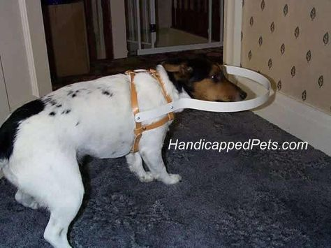 Hoop Harness For Blind Dogs Dog